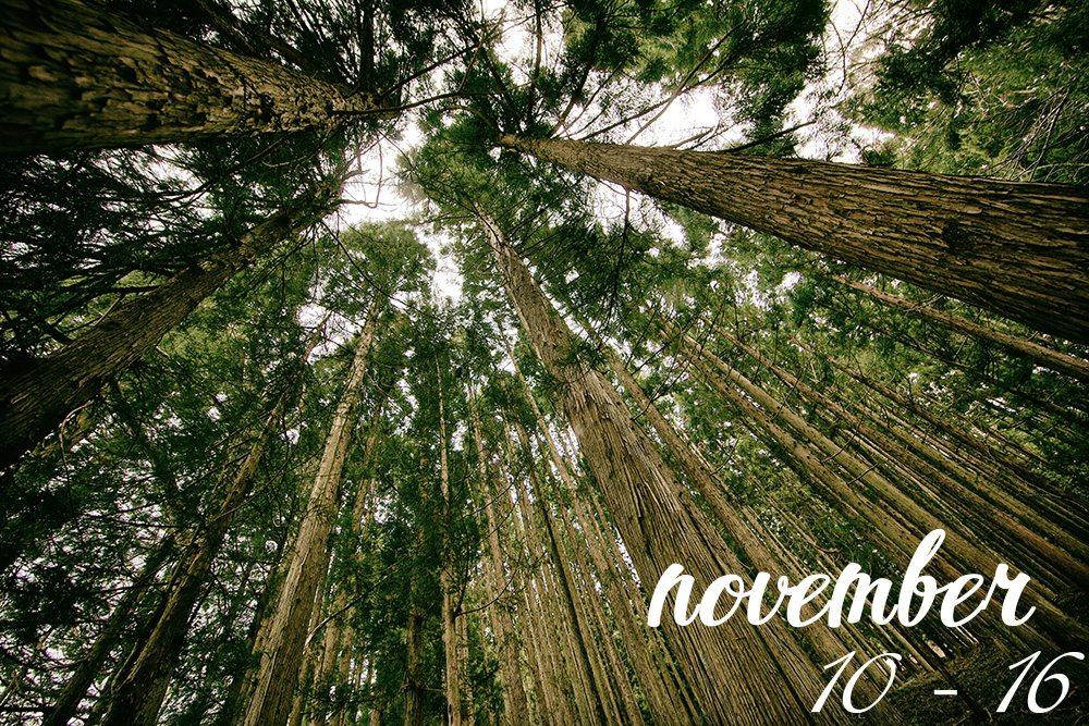 November-10---16