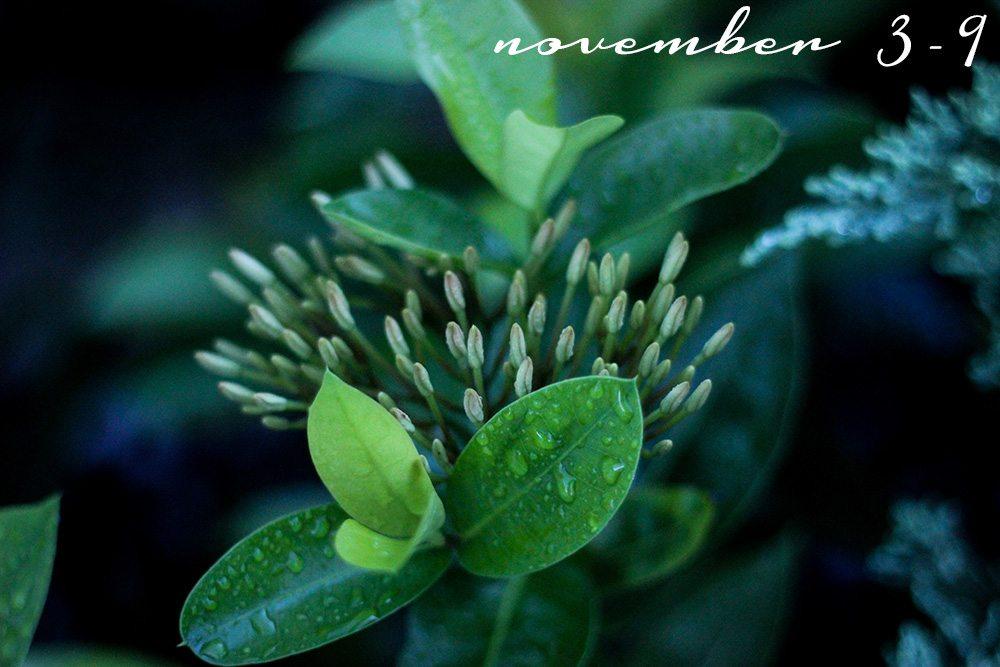 November-3---9