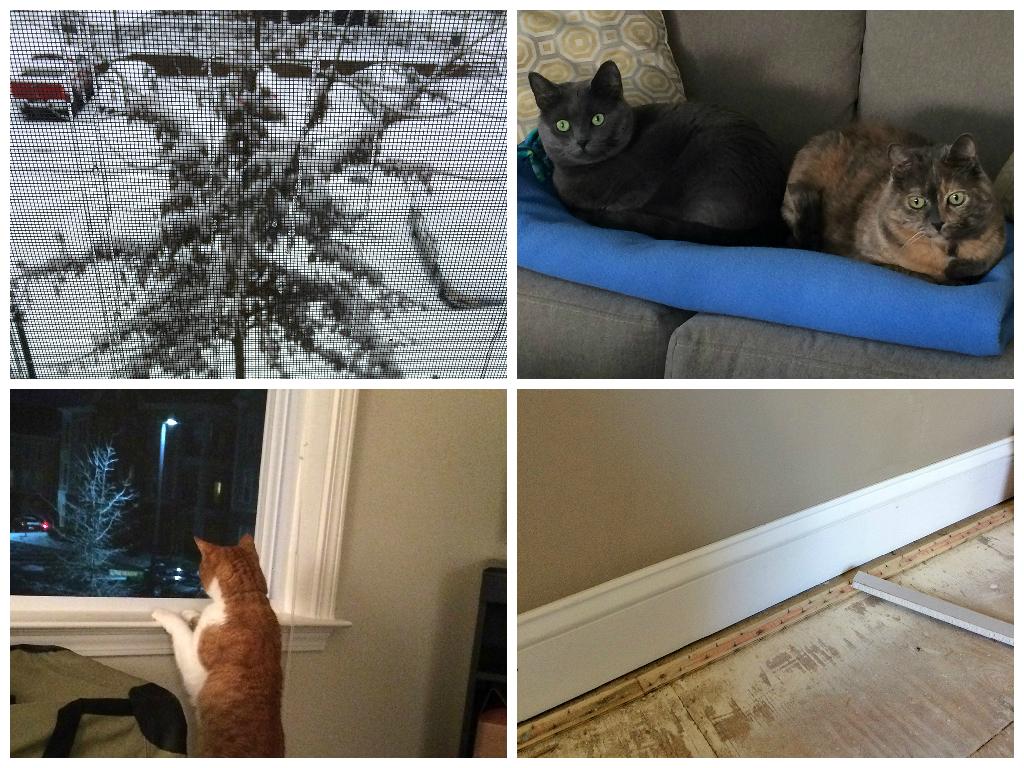 Feb23-Mar1 Collage3